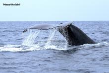 沖縄の海でホエールウオッチング