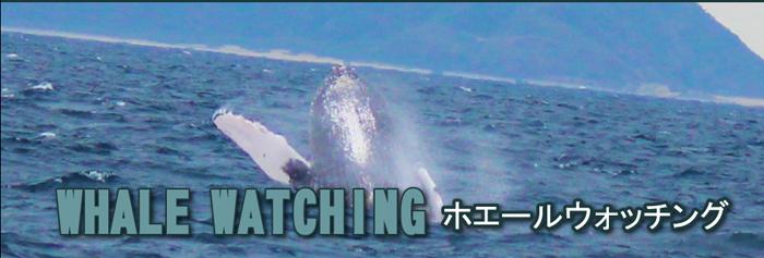 沖縄ホエールウオッチング
